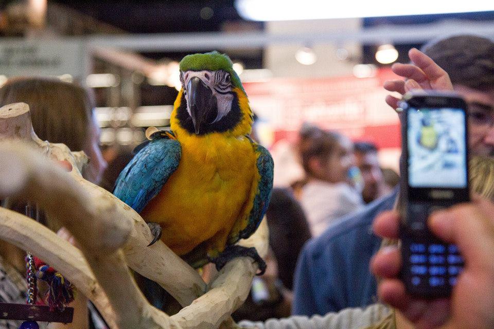 Международная выставка домашних животных в Париже http://travelcalendar.ru/wp-content/uploads/2015/06/Mezhdunarodnaya-vystavka-domashnih-zhivotnyh-v-Parizhe9.jpg