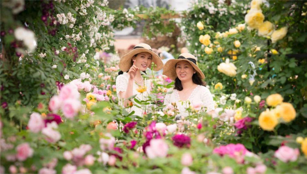 Выставка цветов в Челси http://travelcalendar.ru/wp-content/uploads/2015/06/Vystavka-tsvetov-v-CHelsi_glav5.jpg