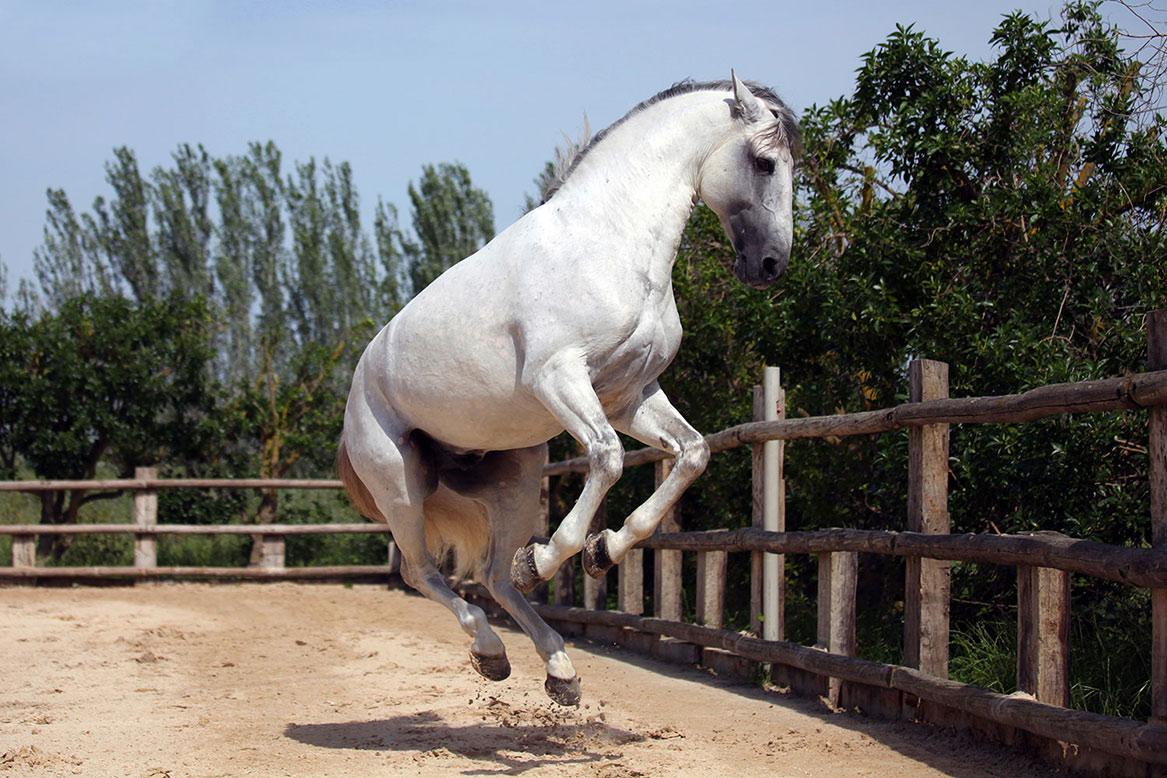 Национальная конная ярмарка в Голегане http://travelcalendar.ru/wp-content/uploads/2015/07/Natsionalnaya-konnaya-yarmarka-v-Golegane.jpg