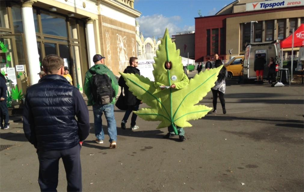 Международная ярмарка конопли Cannafest в Праге http://travelcalendar.ru/wp-content/uploads/2015/08/MEZHDUNARODNAYA-YARMARKA-KONOPLI-V-PRAGE_glavn1.jpg