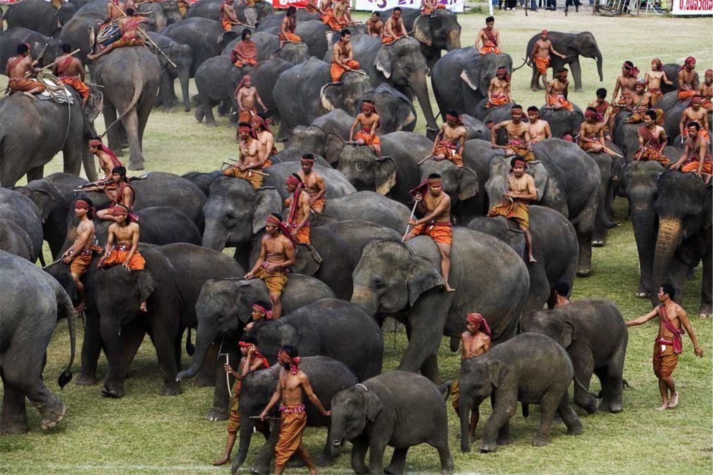 Фестиваль слонов в Сурине http://travelcalendar.ru/wp-content/uploads/2015/09/Festival-slonov-v-Surine_glavn1.jpg