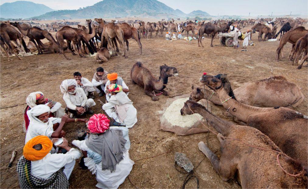 Ярмарка верблюдов в Пушкаре http://travelcalendar.ru/wp-content/uploads/2015/09/YArmarka-verblyudov-v-Pushkare_glav2.jpg