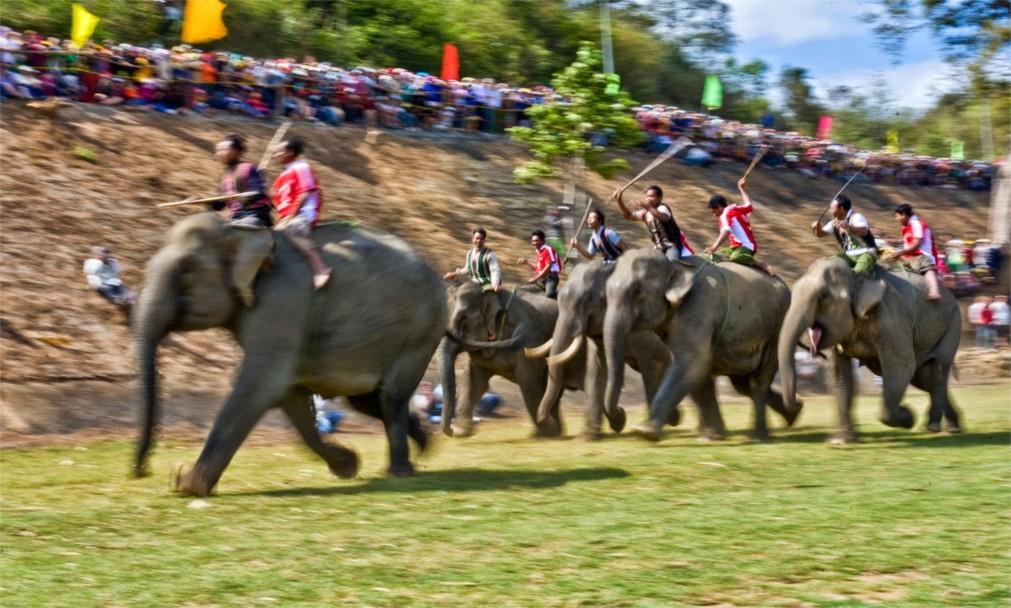 Гонки слонов в Бан Дон http://travelcalendar.ru/wp-content/uploads/2015/10/Gonki-slonov-v-Ban-Don_glav1.jpg