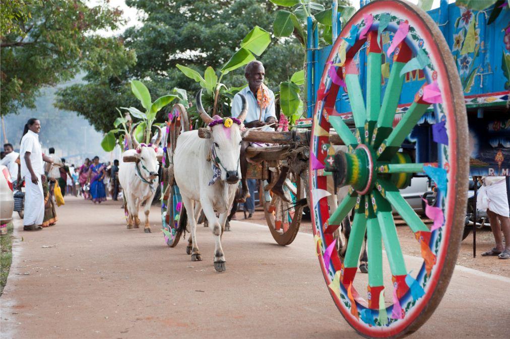 Праздник урожая Понгал в Индии http://travelcalendar.ru/wp-content/uploads/2015/10/Prazdnik-urozhaya-Pongal-v-Indii_glav3.jpg
