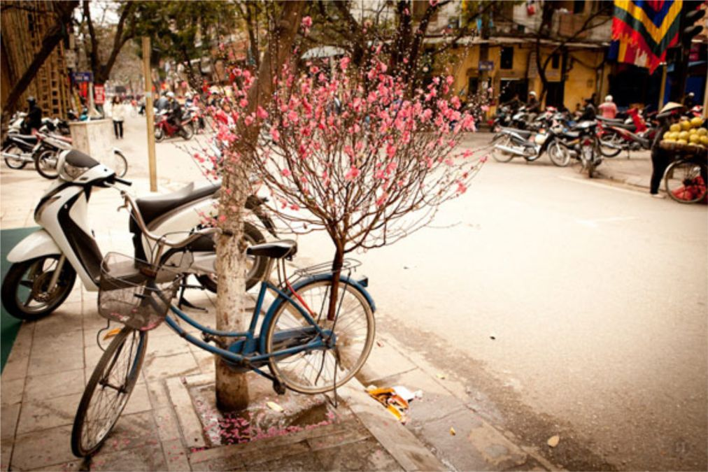 Вьетнамский Новый год Тет в Ханое http://travelcalendar.ru/wp-content/uploads/2015/10/Vetnamskij-Novyj-god-Tet-v-Hanoe_glav2.jpg