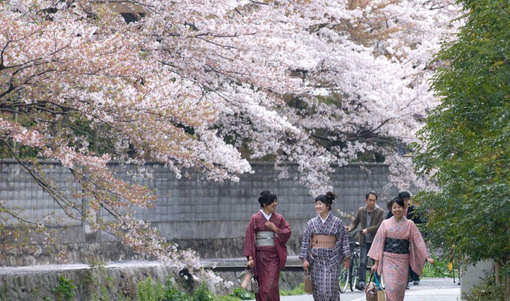 Фестиваль цветения сакуры в Токио http://travelcalendar.ru/wp-content/uploads/2015/11/Festival-tsveteniya-sakury-v-Tokio_glav1.jpg