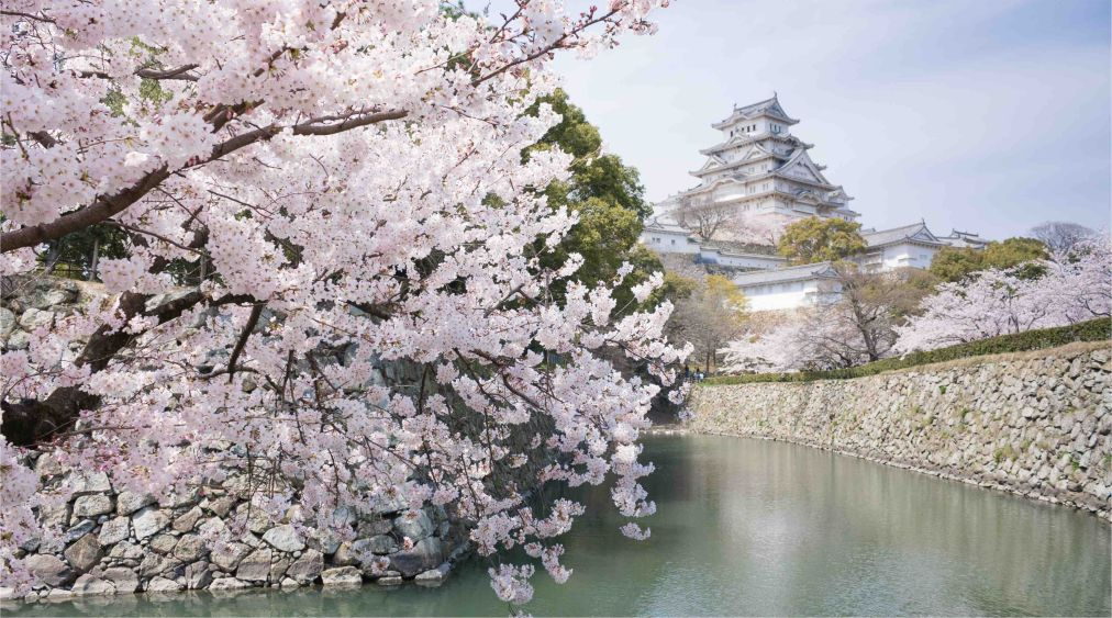 Фестиваль цветения сакуры в Токио http://travelcalendar.ru/wp-content/uploads/2015/11/Festival-tsveteniya-sakury-v-Tokio_glav3.jpg