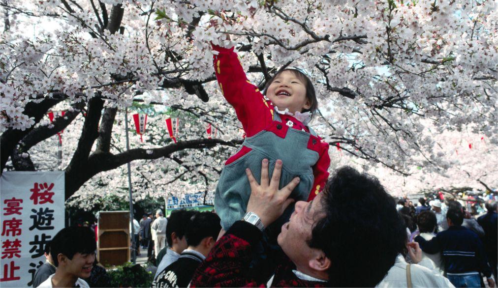 Фестиваль цветения сакуры в Токио http://travelcalendar.ru/wp-content/uploads/2015/11/Festival-tsveteniya-sakury-v-Tokio_glav5.jpg