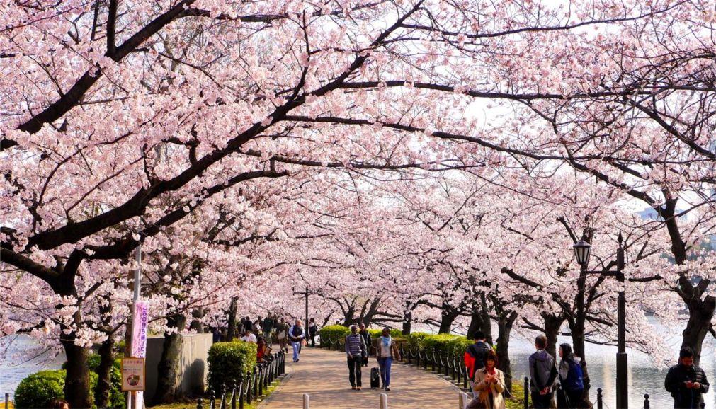Фестиваль цветения сакуры в Токио http://travelcalendar.ru/wp-content/uploads/2015/11/Festival-tsveteniya-sakury-v-Tokio_glav6.jpg