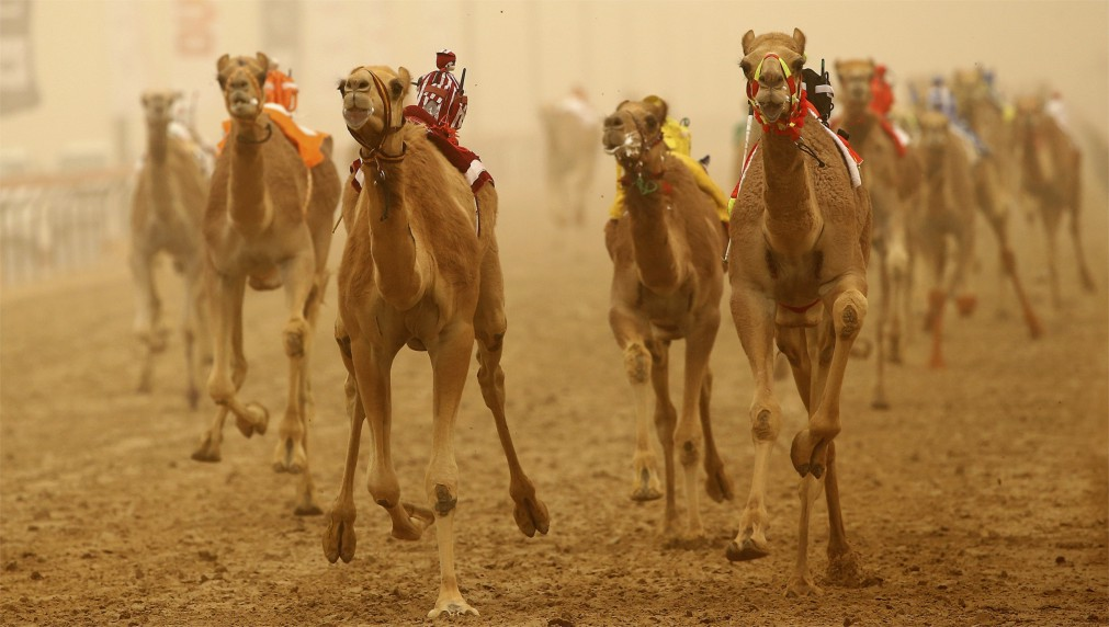 Фестиваль наследия Аль Мармум в Дубае http://travelcalendar.ru/wp-content/uploads/2015/12/Festival-naslediya-Al-Marmum-v-Dubae_glav3.jpg