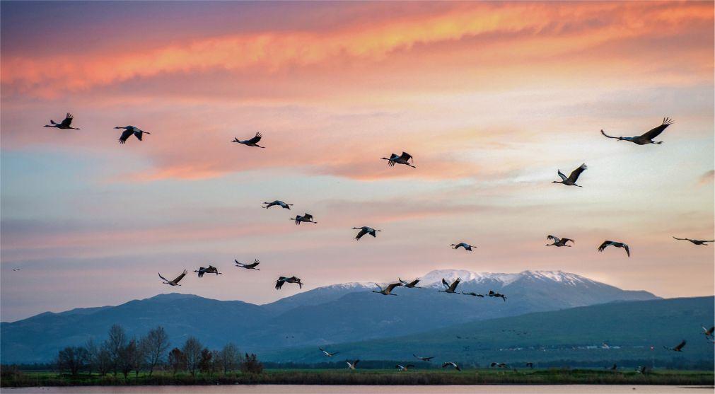 Фестиваль весенней миграции птиц в Эйлате http://travelcalendar.ru/wp-content/uploads/2016/03/Festival-vesennej-migratsii-ptits-v-Ejlate_glav1.jpg
