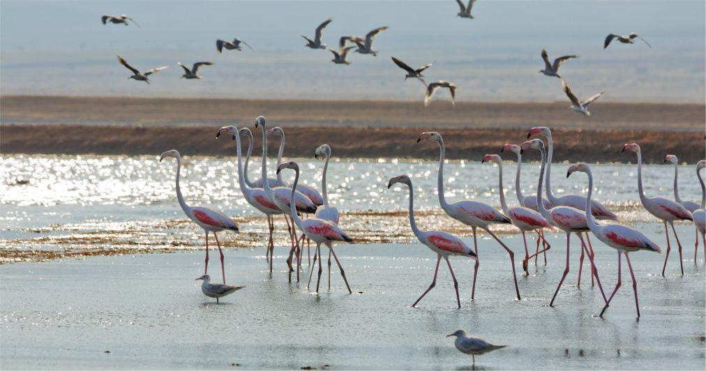 Фестиваль весенней миграции птиц в Эйлате http://travelcalendar.ru/wp-content/uploads/2016/03/Festival-vesennej-migratsii-ptits-v-Ejlate_glav2.jpg