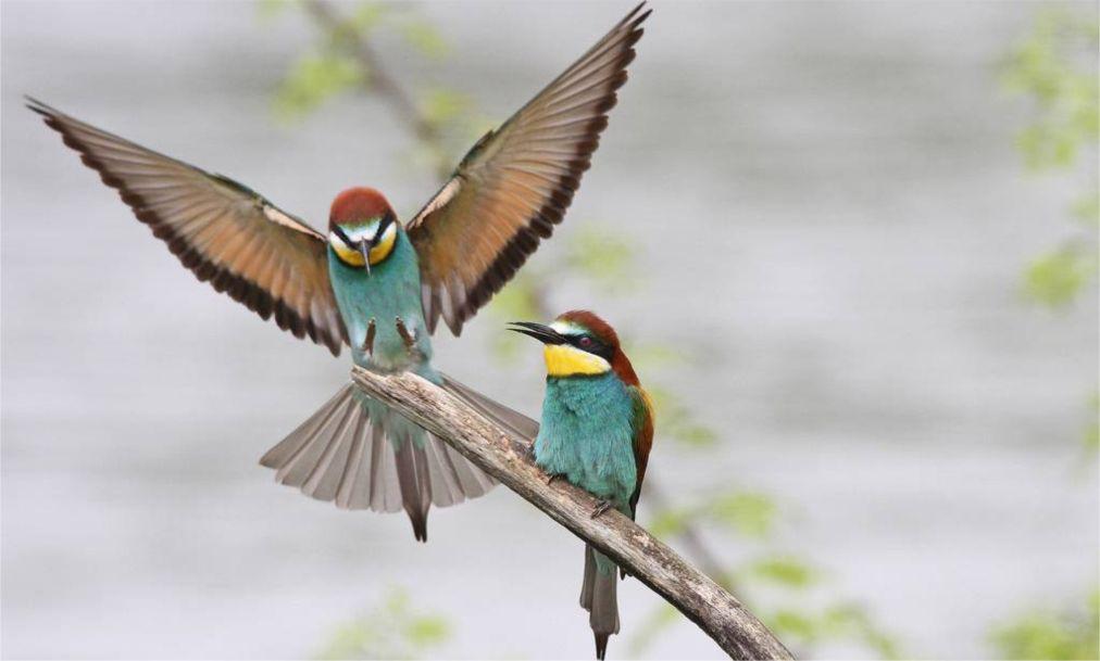 Фестиваль весенней миграции птиц в Эйлате http://travelcalendar.ru/wp-content/uploads/2016/03/Festival-vesennej-migratsii-ptits-v-Ejlate_glav4.jpg