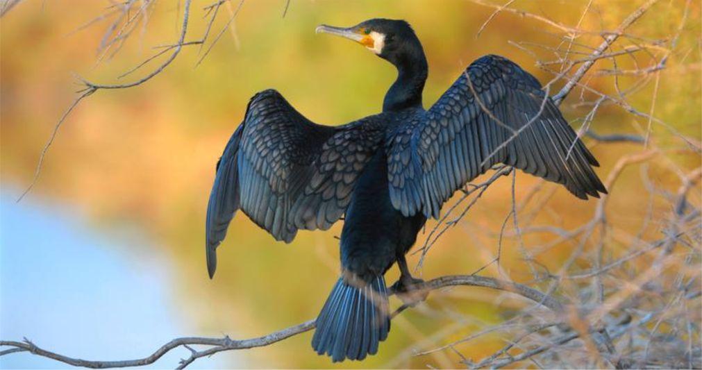 Фестиваль весенней миграции птиц в Эйлате http://travelcalendar.ru/wp-content/uploads/2016/03/Festival-vesennej-migratsii-ptits-v-Ejlate_glav6.jpg