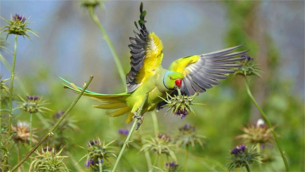Фестиваль весенней миграции птиц в Эйлате http://travelcalendar.ru/wp-content/uploads/2016/03/Festival-vesennej-migratsii-ptits-v-Ejlate_glav7.jpg