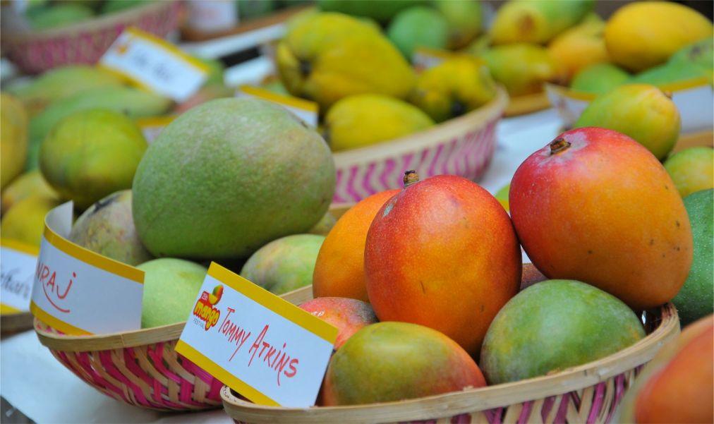 Международный фестиваль манго в Дели http://travelcalendar.ru/wp-content/uploads/2016/05/Mezhdunarodnyj-festival-mango-v-Deli_glav5.jpg