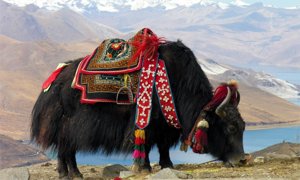 Праздник Сага Дава в Тибете http://travelcalendar.ru/wp-content/uploads/2016/05/Prazdnik-Saga-Dava-v-Tibete_glav3.jpg
