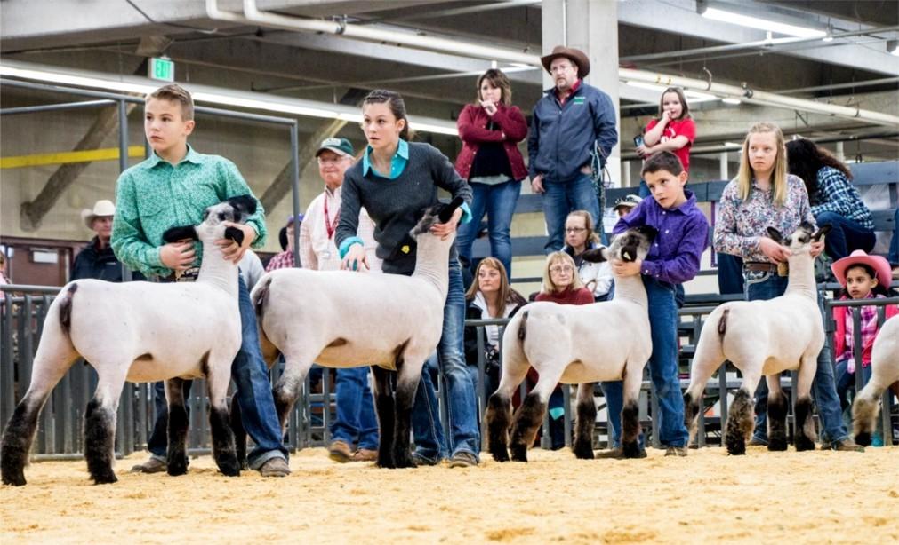 Национальная выставка домашнего скота и родео в Денвере 05b2b028e5bc49b4b895b0b3f5097e2e.jpg