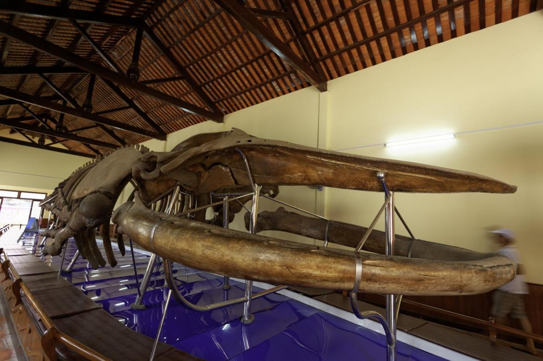 Фестиваль кита во Вьетнаме 08463b363983e5f494e3dae9717534b6.jpeg
