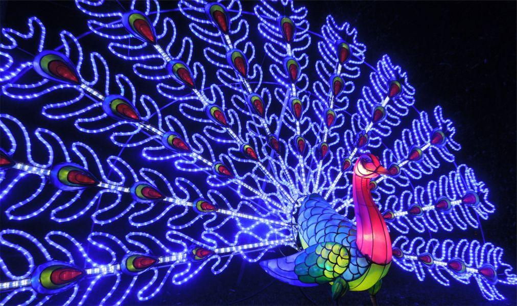 Лондонский фестиваль волшебных фонарей 095d3ddce2dea54c12d4417b0a99b7a6.jpg
