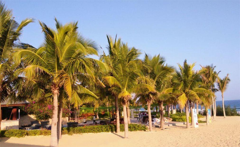 Международный фестиваль кокосов на Хайнане 178d3a6cc8541cd953d496a02276d0b5.jpg
