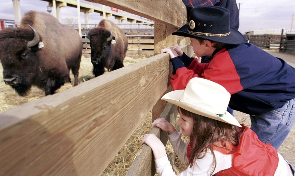 Национальная выставка домашнего скота и родео в Денвере 1923aa52852ac2b096a63fff51658979.jpg