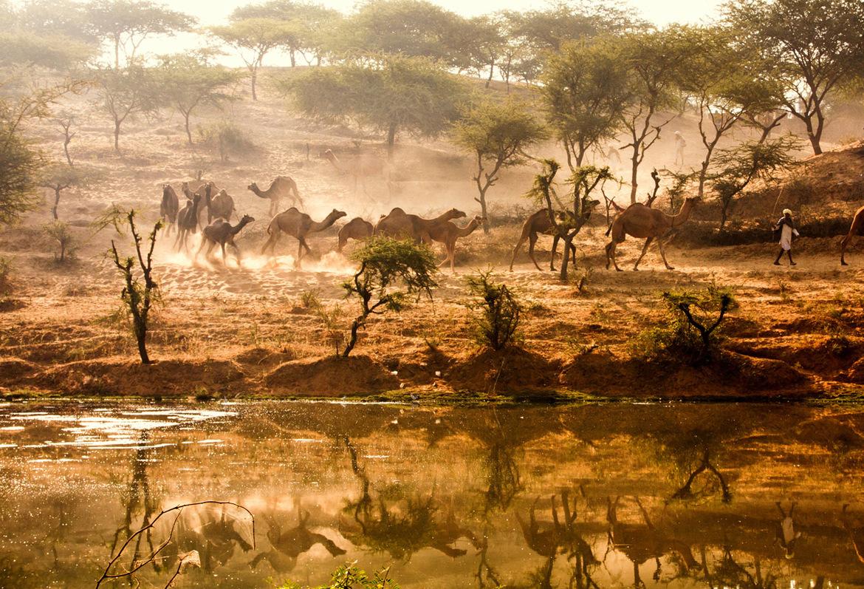 Ярмарка верблюдов в Пушкаре 198379d0c10a068f1dba248b778ffe09.jpg