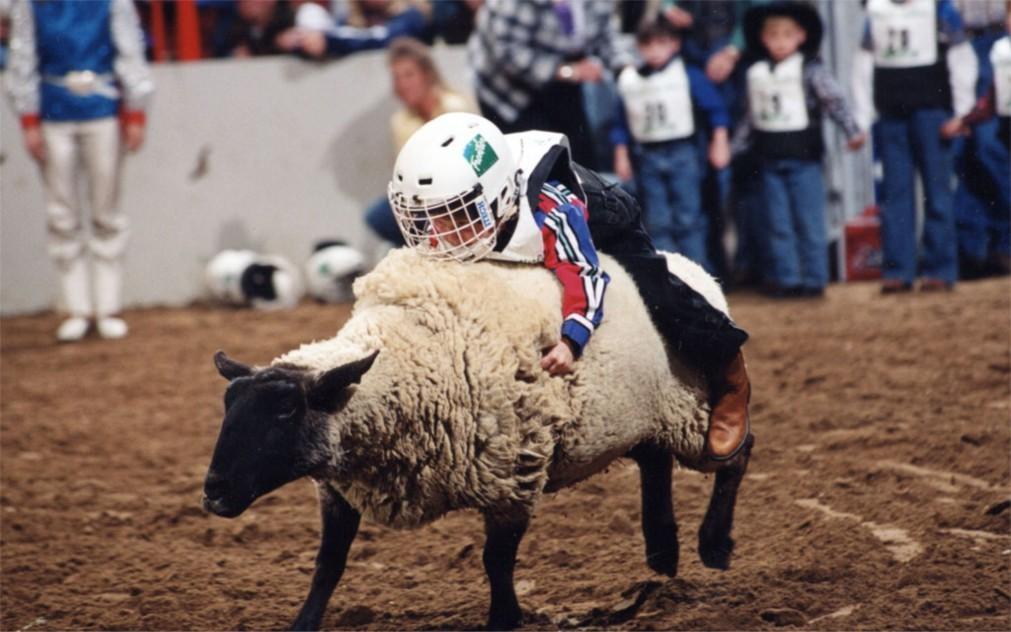 Национальная выставка домашнего скота и родео в Денвере 22fec5fd04198ea7750503222c52b0e5.jpg