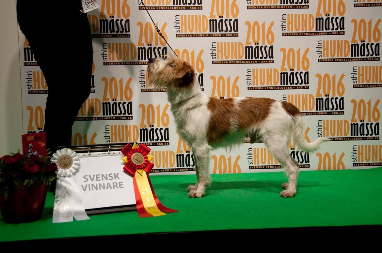 Дог-шоу Stockholm Hundmässa в Стокгольме 2a6822079f822cfede3338751de5f21a.jpg