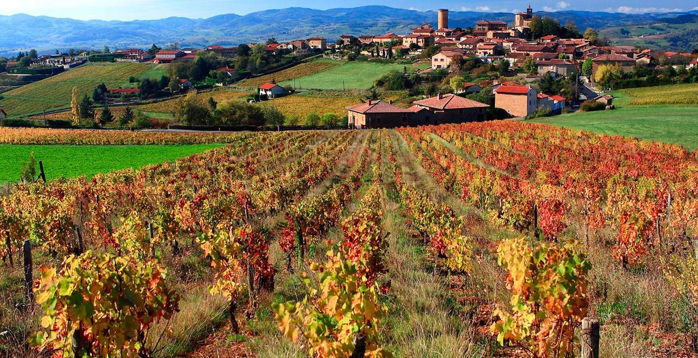 Праздник молодого вина Божоле-нуво во Франции 2c95d68b6547e9fc8d11653ee897a837.jpg