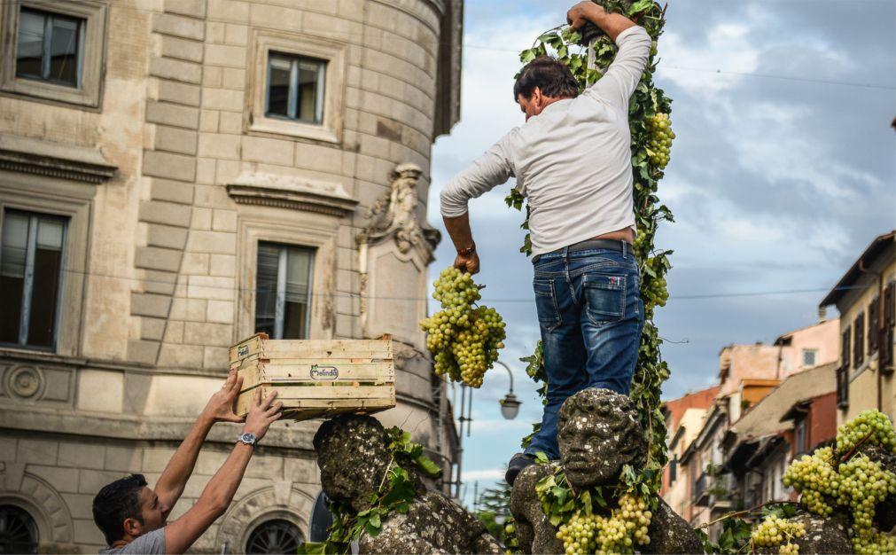 Праздник вина Sagra dell'Uva в Марино 37be8ce512536fa9f5d8bb90e8136037.jpg