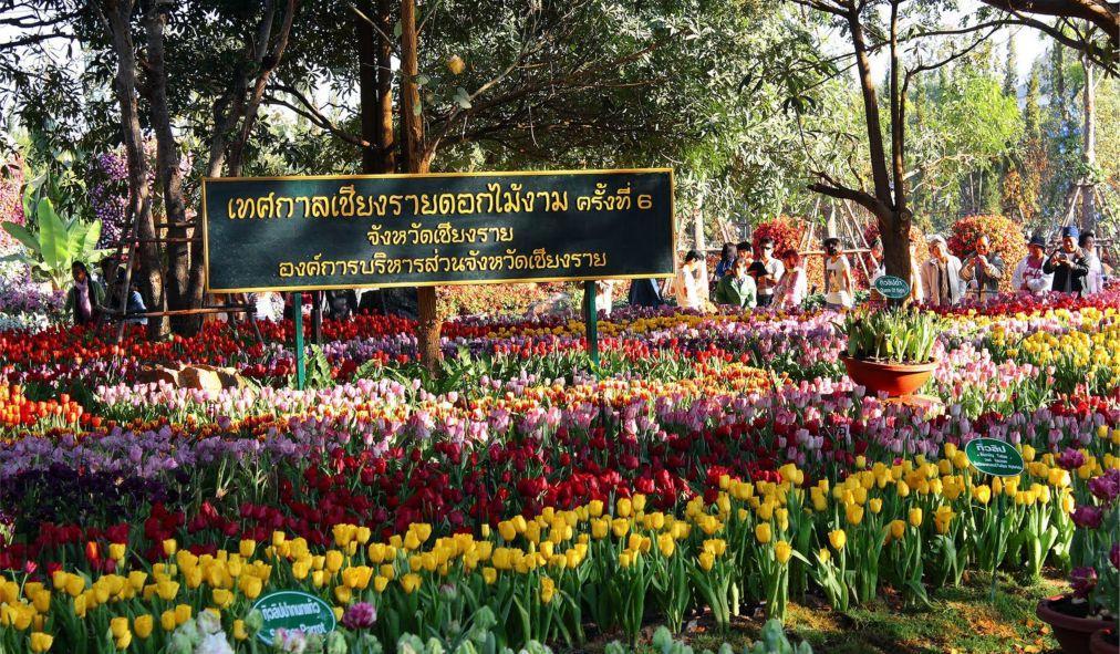 Фестиваль цветов в Чианграй 394b9bef9a3b5d3c5561b239c0dde1e3.jpg
