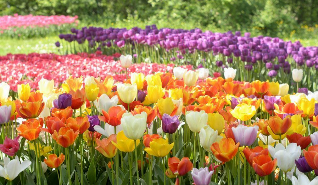 Фестиваль тюльпанов в Турине 3b00af19e531f66d7dbecba6949a3c6f.jpg