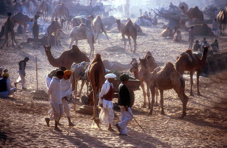 Ярмарка верблюдов в Пушкаре 3c03ebd98e72a90491783d5c36365ca1.jpg
