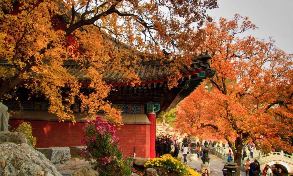 Фестиваль красных листьев в Пекине 4484d79f337b49982318b6761306c64c.jpg