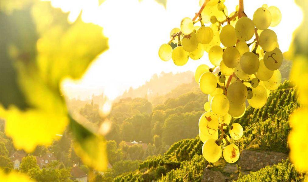 Фестиваль вина Просекко в Тревизо 5d2b7c5b8fd4fefb861db445d86d7b6a.jpg