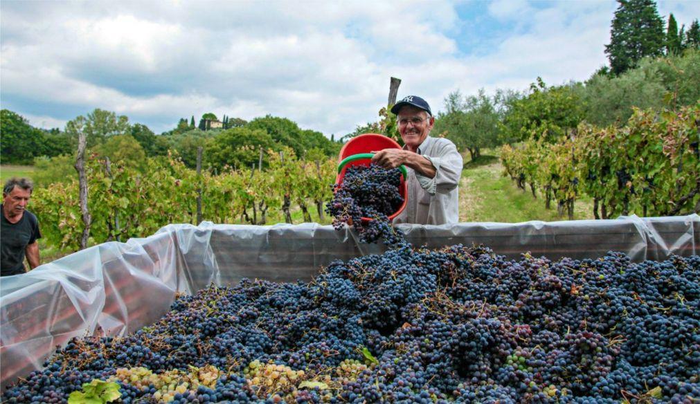 Фестиваль вина «Кьянти Классико Экспо» в Греве 668d9eb1fd1f2a6d31ac4a73c5b86084.jpg