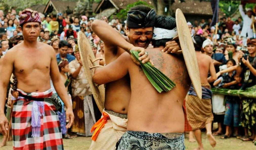 Фестиваль боёв Усаба Самба на Бали 6b2deb5d18d638c86cf008e15be58c54.jpg