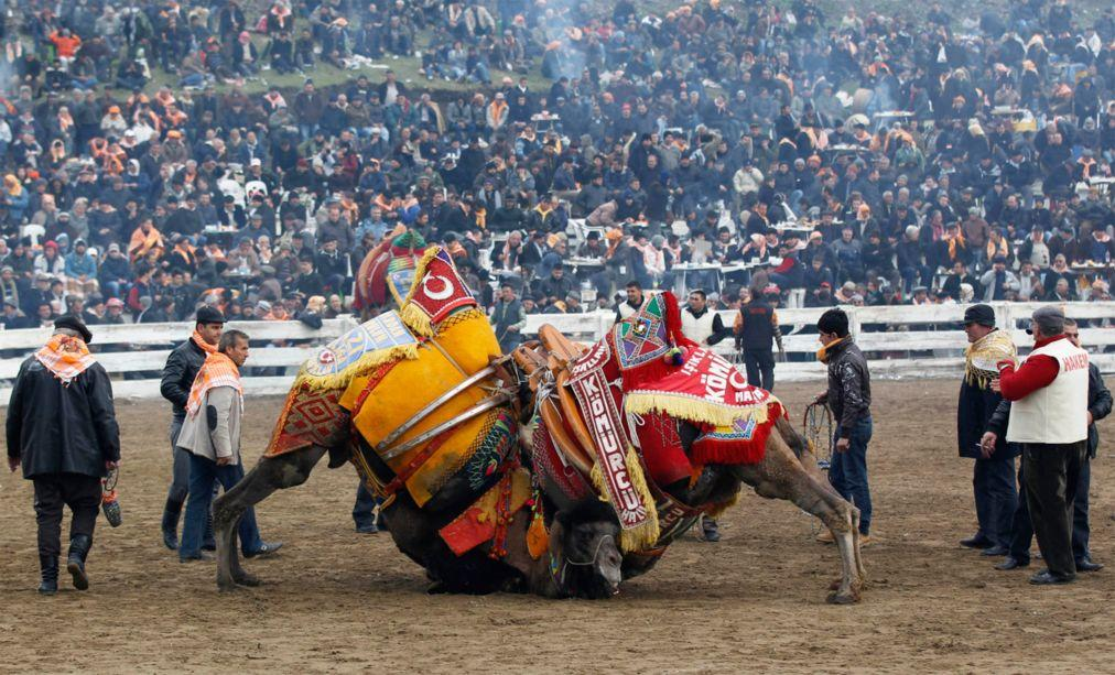 Верблюжьи бои в Сельчуке 6e9d96d0b26939dfabb862d8238e8f03.jpg