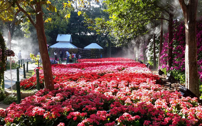 Фестиваль цветов в Чианграй 7240c1169c94602669c796994aba86a0.jpg