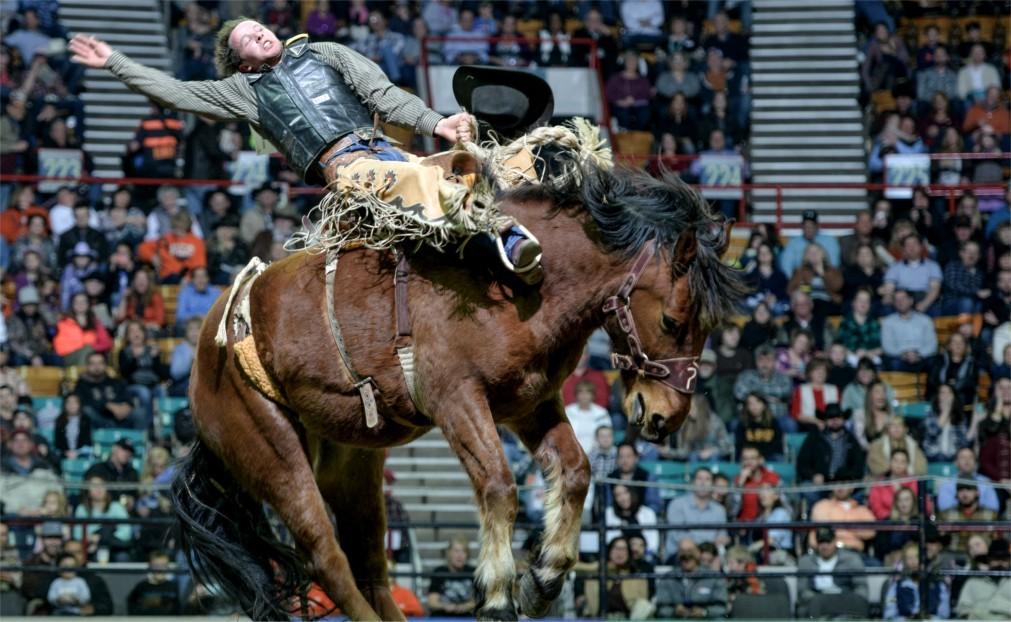 Национальная выставка домашнего скота и родео в Денвере 7537ec4f65fcc2aa9db5ae8a483e0691.jpg