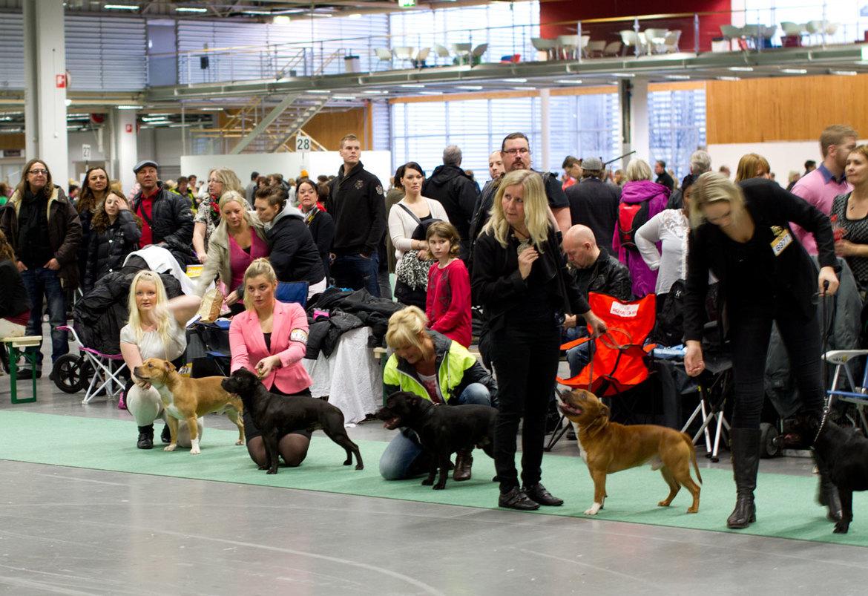 Дог-шоу Stockholm Hundmässa в Стокгольме 7a574c60945a8850d9e9f29422dccaf0.jpg