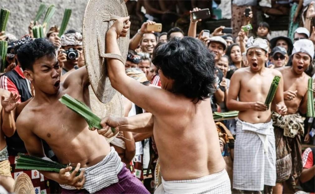 Фестиваль боёв Усаба Самба на Бали 8605018403699c03e85e076b387073ff.jpg