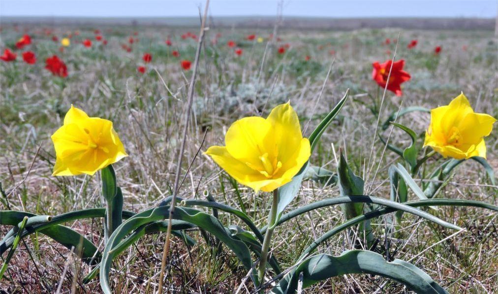Фестиваль тюльпанов в Калмыкии 9d504a1f516766c8158e61ff0a19e52f.jpg