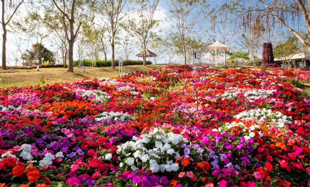 Фестиваль цветов «Флора Парк» в Кхао Пхаенг Ма b7895aa3a72151a051605c66f9e5abd1.jpg