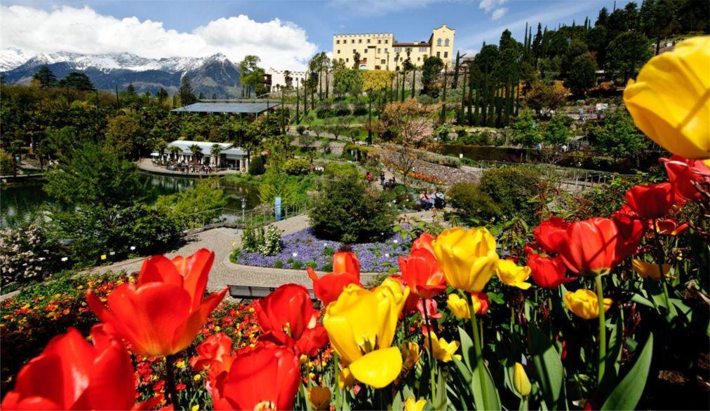 Фестиваль тюльпанов в Турине c1e143bece78b6f9d9a9ff071223ce37.jpg