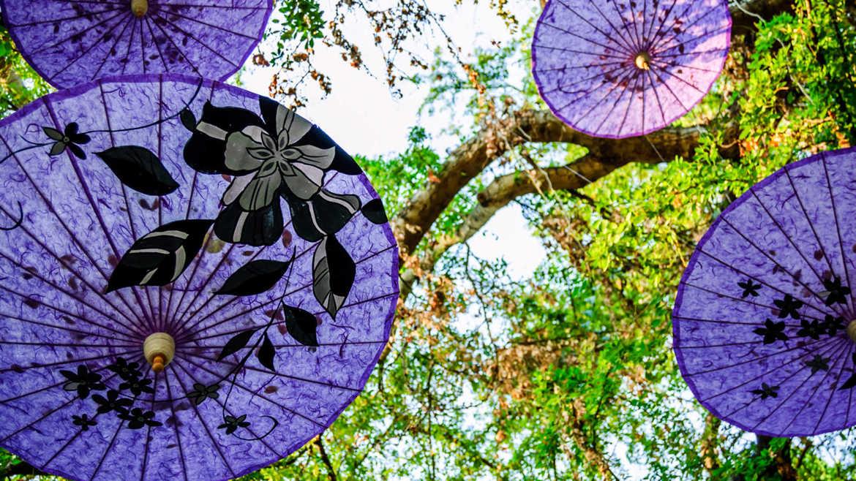 Фестиваль цветов в Чианграй c41942dd93fa65ef8c53fa849d424bec.jpg