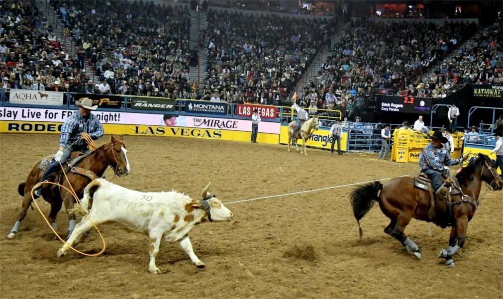 Национальная выставка домашнего скота и родео в Денвере c713cd1ada2cb6e29364bd636c77a311.jpg