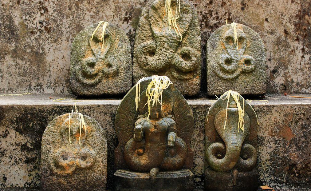 Фестиваль кобр Наг Панчами в Индии c74f93d2675da44a1332247b5948ef34.jpg