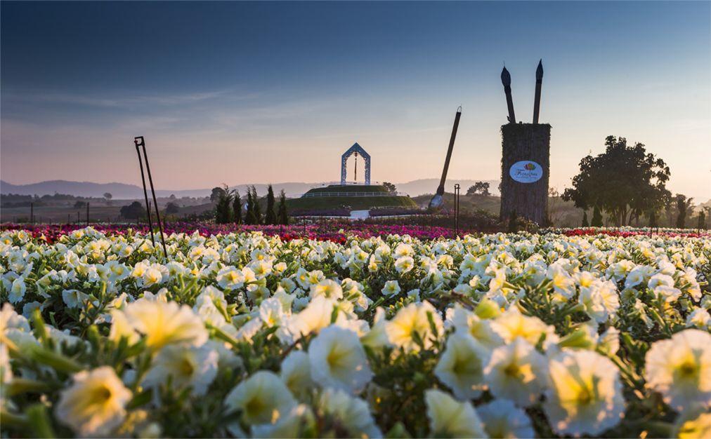 Фестиваль цветов «Флора Парк» в Кхао Пхаенг Ма d1d99beddb5fb93d996cc34080b7014c.jpg